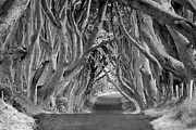 Dark Hedges Prints - Dark Hedges III Print by Jack Daulton