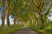 Dark Hedges Posters - Dark Hedges Ireland Poster by Jack Daulton
