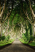 Dark Hedges Posters - Dark Hedges Poster by Michelle McMahon