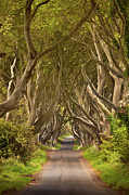 Mounted Photos - Dark Hedges by Pawel Klarecki
