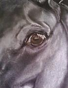 Black Horse Pastels Prints - Dark Horse Print by Tracy Crawford