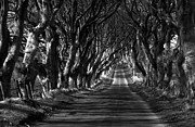 Dark Hedges Posters - Dark paths Poster by David McFarland