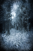 Forest Terror Prints - Dark Place Print by Svetlana Sewell