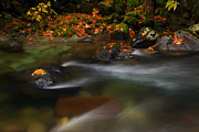 Skate Photo Metal Prints - Dark Water Autumn Metal Print by Mike  Dawson