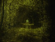 Mystical Art Photos - Dark Wood by Stefan Kuhn