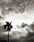 Florida Flowers Posters - Darkness Moving In - Sepia Poster by Chris Andruskiewicz