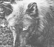Wolf Photograph Mixed Media - Darkside Wolf by Debra     Vatalaro