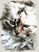 Bdmeredith Prints - Darling Kitty Print by Brian D Meredith