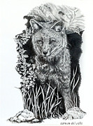 Wildlife Drawings Drawings Prints - Darwins Fox Print by Carmen Del Valle