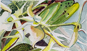 Garden Drawings - Darwins Orchids by Mindy Newman