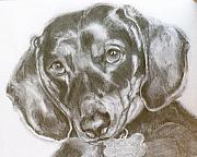 Greeting Card Drawings Posters - Daschund Pencil Drawing Poster by Susan A Becker