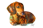 Hot Dog Posters - Daschund Puppy Dog Poster by Christy  Freeman