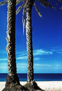 North Shore Prints - Date Palms Sunset Beach Print by Thomas R Fletcher