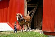 Amish Farms Photos - David and Goliath Number Two by Brian M Lumley