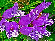 Montana Digital Art - Davidsons  Penstemon on Highline Trail in Glacier NP by Ruth Hager
