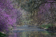 Uc Davis Art - Davis Arboretum Creek by Agrofilms Photography