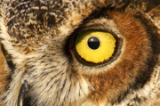 Owl Eyes Prints - Dawn of a New Day Print by Janet Fikar