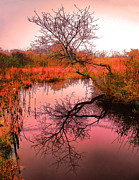 Dawn On The Marsh Print by Nick Zelinsky