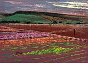 California Drawings Metal Prints - Dawn Over Lompoc Flower Fields Metal Print by Donald Maier