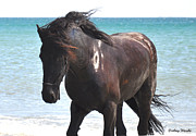 Friesian Posters - Day at the Beach Poster by Amy Warnke