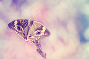 Pastel Colors Photos - Day Dream by Amy Tyler