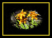 Framing Framed Prints - Day Lillies Framed Print by Rosalie Scanlon