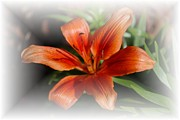 Day Lilly Prints - Day Lilly Print by Judy Hall-Folde