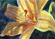 Atc Originals - Day Lily Close Up by Jimmie Trotter