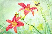 Summer Garden Scene Posters - Day Lily Delight Poster by Bonnie Barry