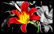 Seductive Mixed Media - Day Lily Reaching Out by Ms Judi