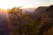 Nature Center Posters - Daybreak at Mather Point Poster by Adam Pender