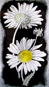 Daisies Drawings Prints - Days Eye Print by David Rudeforth