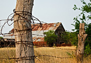 Old Fence Posts Art - Days Gone By by Lisa Moore