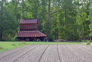 Tobacco Photos - Days Gone By--Tobacco Barn Series  by Suzanne Gaff