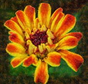 Zinnia Paintings - Dazzling Zinnia by Balram Panikkaserry