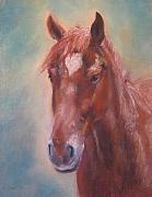 Horse Head Pastels Framed Prints - De Vito Framed Print by Sabina Haas