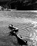 Mariposa County Prints - Dead Branch Tenaya Lake CA Print by Troy Montemayor