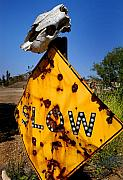 Cow Metal Prints - Dead End Metal Print by Craig Incardone