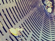 Nate Breslaw - Dead Finch on Tree Grate...