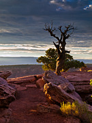 Pauls Colorado Photography Prints - Dead Juniper Print by Paul Gana