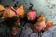 Shotwell Photography Metal Prints - Dead Roses 2 Metal Print by Kathi Shotwell