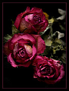 Rose Photography Posters - Dead Roses Poster by Déco