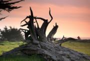 Chuck Kuhn - Dead Tree