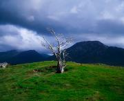 Haunted Hills Posters - Dead Tree, Connemara, Co Galway, Ireland Poster by The Irish Image Collection 