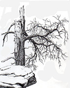 Evergreen Drawings Posters - Dead Tree Poster by Inger Hutton