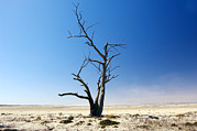 Dry Lake Photos - Dead Tree by Jeremy Walker