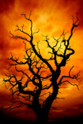 Orange Photos - Dead Tree by Meirion Matthias