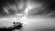 Tree Over Water Prints - Dead Tree Trunk Lies In Baltic Sea Print by Andreas Levers