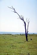Dead Tree Print by Victor De Schwanberg