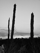 Dead Trees Against The Evening Skies Print by Floyd Smith
